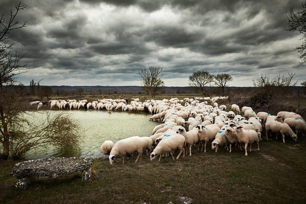 C'est sous un ciel menaçant que le troupeau arrive au lac de Combescure